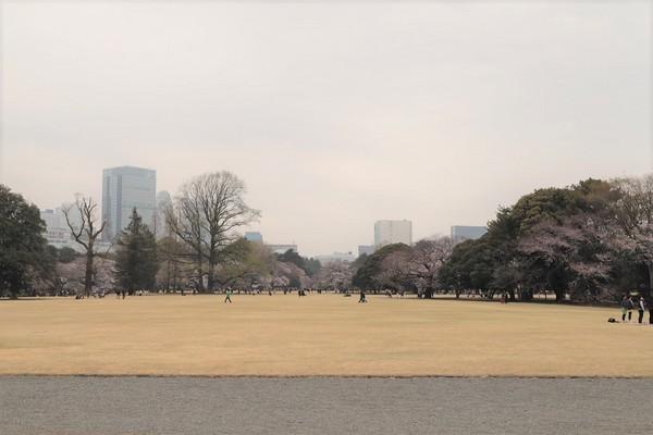 新宿御苑_190330_19.jpg