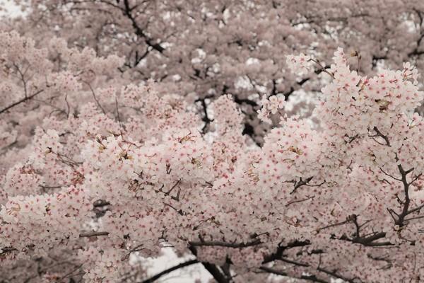 新宿御苑_190330_21.jpg