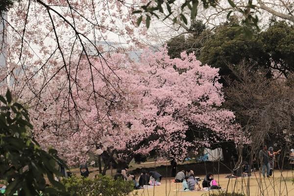 新宿御苑_190330_22.jpg