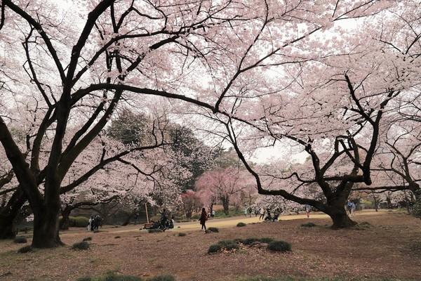 新宿御苑_190330_23.jpg