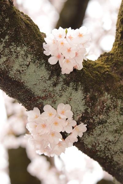 新宿御苑_190330_26.jpg