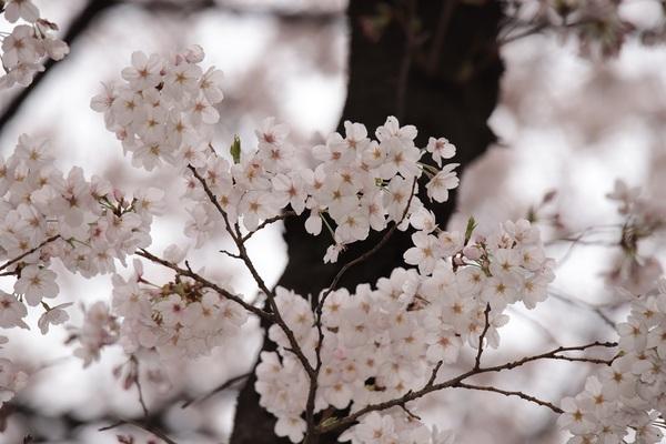 新宿御苑_190330_30.jpg