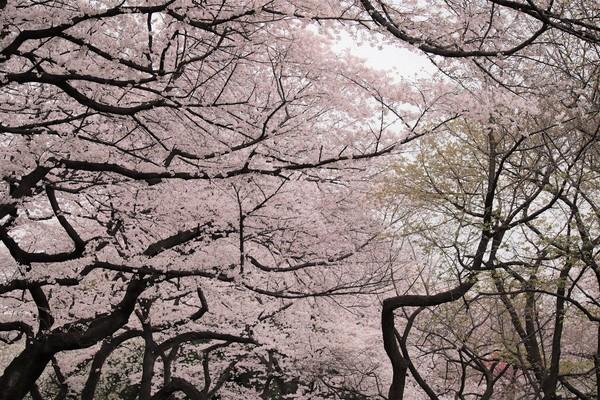 新宿御苑_190330_31.jpg