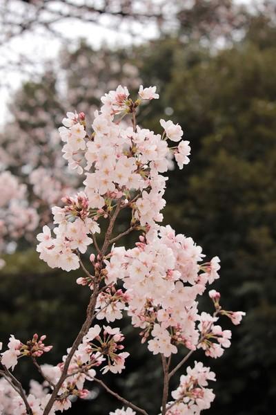 新宿御苑_190330_47.jpg