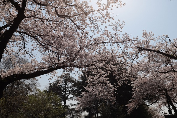 新宿御苑_190406_05.jpg