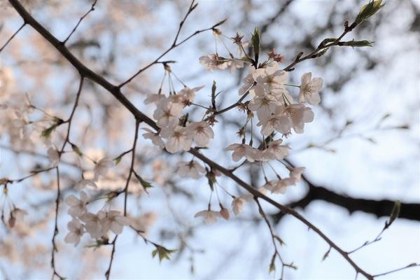 新宿御苑_190406_28.jpg