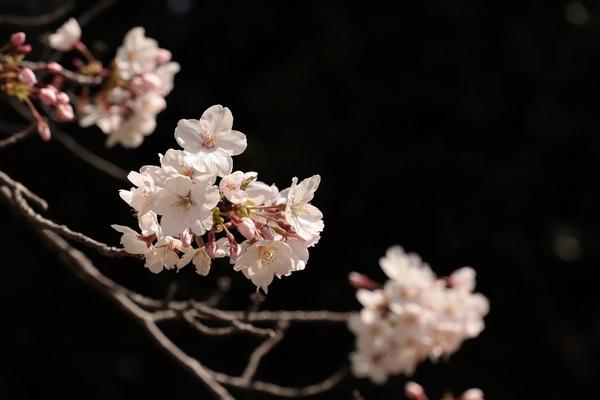 新宿御苑_190406_30.jpg
