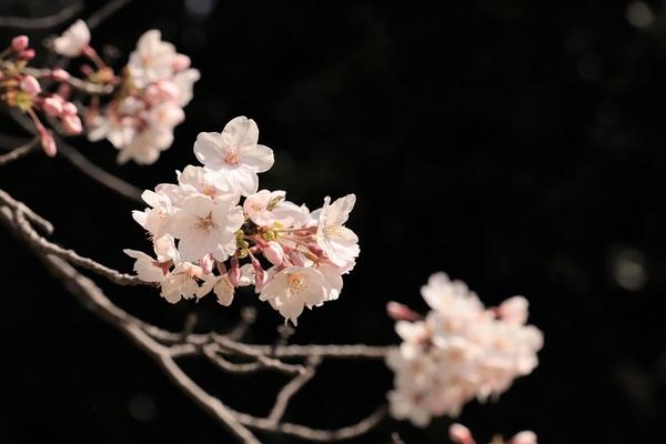 新宿御苑_190406_32.jpg