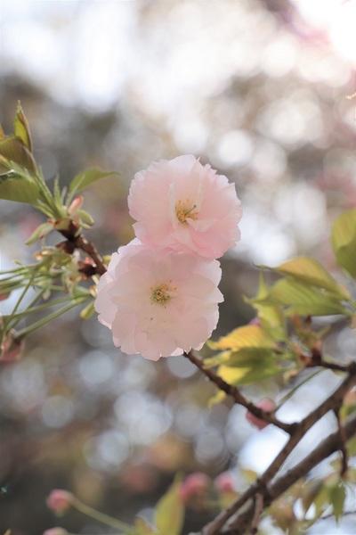 新宿御苑_190406_36.jpg