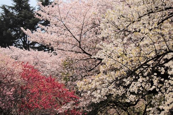 新宿御苑_190406_42.jpg