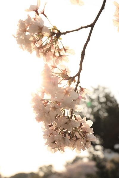新宿御苑_190406_54.jpg