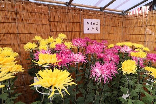 高幡不動_181110_14.jpg