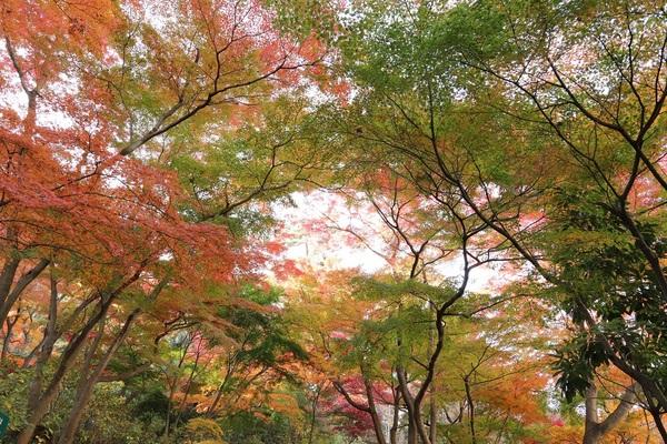 高幡不動_181201_32.jpg